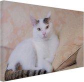 Prachtige kat Canvas 30x20 cm - klein - Foto print op Canvas schilderij (Wanddecoratie woonkamer / slaapkamer) / Dieren Canvas Schilderijen