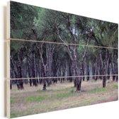 Eikenbossen in het Spaanse Nationaal park Doñana Vurenhout met planken 120x80 cm - Foto print op Hout (Wanddecoratie)