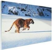 FotoCadeau.nl - Siberische tijger op jacht Glas 90x60 cm - Foto print op Glas (Plexiglas wanddecoratie)