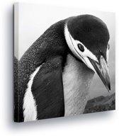 Penguin Canvas Print 80cm x 80cm