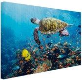 Schildpad bij koraalrif Canvas 30x20 cm - Foto print op Canvas schilderij (Wanddecoratie)