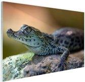 Baby krokodil Glas 30x20 cm - Foto print op Glas (Plexiglas wanddecoratie)