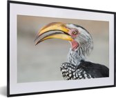 Foto in lijst - Een portret van een Zuidelijke geelsnaveltok fotolijst zwart met witte passe-partout 60x40 cm - Poster in lijst (Wanddecoratie woonkamer / slaapkamer)