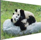 Twee grote pandas op een steen Aluminium 60x40 cm - Foto print op Aluminium (metaal wanddecoratie)