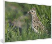 Foto in lijst - Veldleeuwerik tussen het groene gras fotolijst wit 60x40 cm - Poster in lijst (Wanddecoratie woonkamer / slaapkamer)