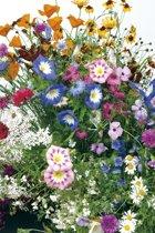 Veldbloemen Mini Wildbloemen eenjarig 1 kilo