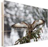 Volwassen buizerd in de besneeuwde landen van Tsjechië Vurenhout met planken 90x60 cm - Foto print op Hout (Wanddecoratie)