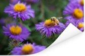 Een honingbij op een aster bloem Poster 90x60 cm - Foto print op Poster (wanddecoratie woonkamer / slaapkamer)