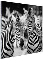 Zebra zwart wit Aluminium 60x40 cm - Foto print op Aluminium (metaal wanddecoratie)