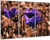 Canvas schilderij Tulp | Paars, Bruin, Wit | 120x80cm 3Luik