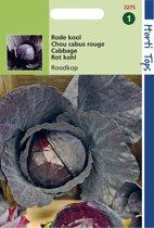 Hortitops Zaden - Rodekool Roodkop ( Cabeza Negra 2 )