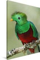 Portret van een felgekleurde Quetzal Canvas 40x60 cm - Foto print op Canvas schilderij (Wanddecoratie woonkamer / slaapkamer)
