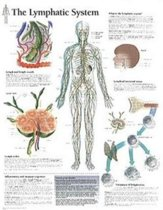 Lymphatic System Laminated Poster