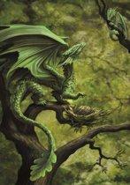Anne Stokes Wenskaart Forest Dragon