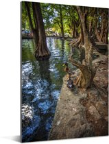 Boomstammen de beekjes van het Nationaal park Lago de Camécuaro Aluminium 120x180 cm - Foto print op Aluminium (metaal wanddecoratie) XXL / Groot formaat!