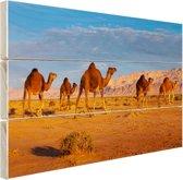 Dromedaris kameel in Afrikaanse woestijn Hout 30x20 cm - klein - Foto print op Hout (Wanddecoratie)
