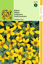 2 stuks Bidens Humilis Golden Eye