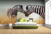 FotoCadeau.nl - Zebras fotoprint Fotobehang 380x265
