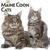 Maine Coon Cats Kalender 2019