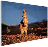 Kangoeroe zonsondergang Glas 90x60 cm - Foto print op Glas (Plexiglas wanddecoratie)