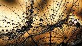 Fotobehang Bloemen | Bruin, Goud | 312x219cm