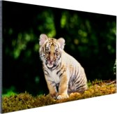 FotoCadeau.nl - Tijgerwelp in het bos Aluminium 120x80 cm - Foto print op Aluminium (metaal wanddecoratie)
