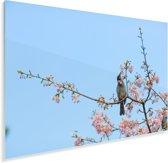 Veldleeuwerik tussen de bloesems Plexiglas 60x40 cm - Foto print op Glas (Plexiglas wanddecoratie)