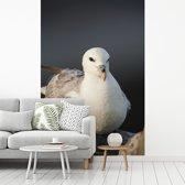 Fotobehang vinyl - Close-up van een Noordse stormvogel breedte 240 cm x hoogte 360 cm - Foto print op behang (in 7 formaten beschikbaar)