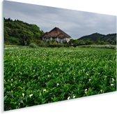 Een uitgestrekte vlakte vol met alocasia bloemen in Azië Plexiglas 180x120 cm - Foto print op Glas (Plexiglas wanddecoratie) XXL / Groot formaat!
