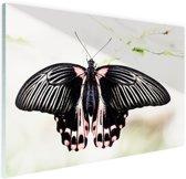 Zwart-roze vlinder Glas 60x40 cm - Foto print op Glas (Plexiglas wanddecoratie)