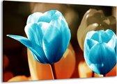 Canvas schilderij Tulp | Blauw, Oranje, Bruin | 140x90cm 1Luik