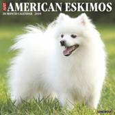 Just American Eskimos 2019 Calendar