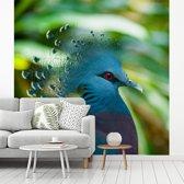 Fotobehang vinyl - Dierenportret van de kop van een waaierduif breedte 240 cm x hoogte 240 cm - Foto print op behang (in 7 formaten beschikbaar)