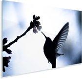 Zwart-wit afbeelding van een Kolibrie zwevend met wijd gespreide vleugels Plexiglas 90x60 cm - Foto print op Glas (Plexiglas wanddecoratie)