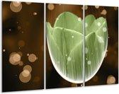 Glasschilderij Tulp | Groen, Bruin | 120x80cm 3Luik | Foto print op Glas |  F004994