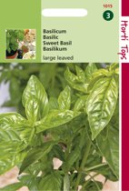 Hortitops Zaden - Basilicum Grove