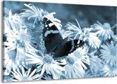 Schilderij | Canvas Schilderij Bloemen, Vlinder | Blauw, Grijs, Zwart | 140x90cm 1Luik | Foto print op Canvas