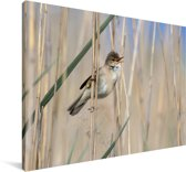Kleine karekiet zingend tussen het riet Canvas 30x20 cm - klein - Foto print op Canvas schilderij (Wanddecoratie woonkamer / slaapkamer)