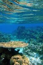 Coral Reef in Fiji Journal