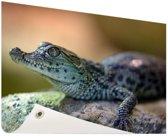 Baby krokodil Tuinposter 60x40 cm - klein - Tuindoek / Buitencanvas / Schilderijen voor buiten (tuin decoratie)