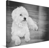 Zwart witte afbeelding van een Maltezer Canvas 80x60 cm - Foto print op Canvas schilderij (Wanddecoratie woonkamer / slaapkamer) / Huisdieren Canvas Schilderijen