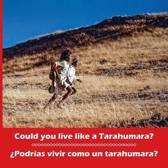 Could You Live Like a Tarahumara? podr as Vivir Como Un Tarahumara? Bilingual Spanish and English