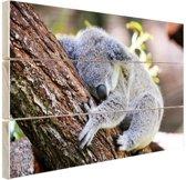 Slapende koala Hout 120x80 cm - Foto print op Hout (Wanddecoratie)