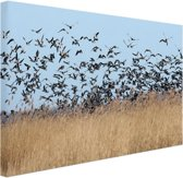 Groep ganzen Canvas 60x40 cm - Foto print op Canvas schilderij (Wanddecoratie woonkamer / slaapkamer) / Dieren Canvas Schilderijen