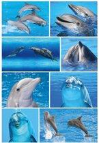 24x Dolfijn dieren stickers - kinderstickers - stickervellen - knutselspullen