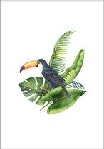 Toucan (21x29,7cm) - Tropisch - Poster - Print - Wallified