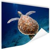 Zeeschildpad  Poster 60x40 cm - Foto print op Poster (wanddecoratie)
