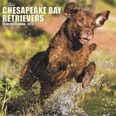 Just Chesapeake Bay Retrievers 2019 Wall Calendar (Dog Breed Calendar)