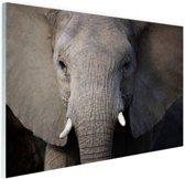 FotoCadeau.nl - Close-up van olifant Glas 60x40 cm - Foto print op Glas (Plexiglas wanddecoratie)