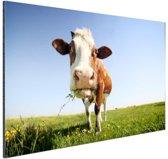 FotoCadeau.nl - Close-up koe Aluminium 30x20 cm - Foto print op Aluminium (metaal wanddecoratie)